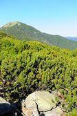 Mountain landscape — Stok fotoğraf