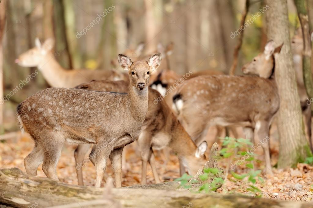 Deer in autumn forest — Stock Photo #14745083