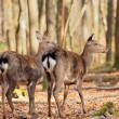 Deer in autumn forest - Stok fotoğraf