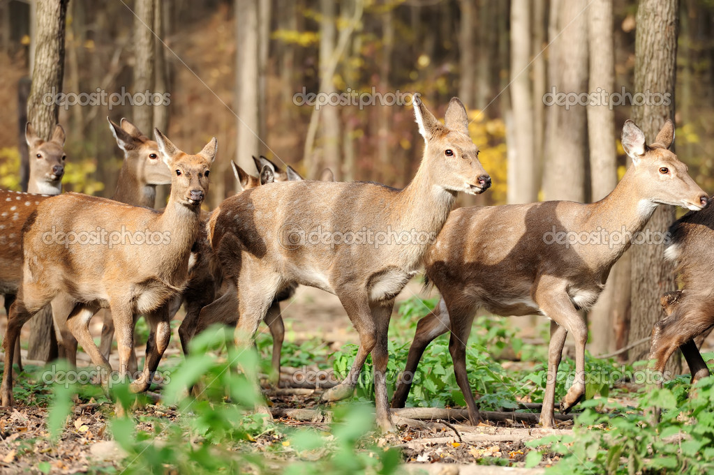 Deer in autumn forest — Stock Photo #15209405