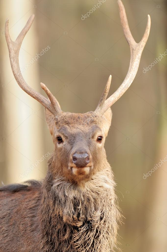 Deer in autumn forest — Stock Photo #15209425