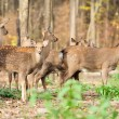 Deer in autumn forest — Stock Photo #16281463