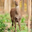 Deer in autumn forest — Stock Photo #16281469