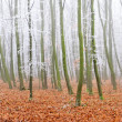 Landscape of a forest with fog — Stock Photo