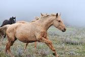 Pferd — Stockfoto