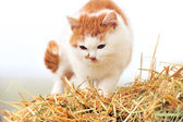 Cat on a straw — Stock Photo