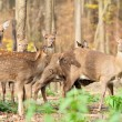 Stock Photo: Deer in autumn forest