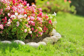 Pretty manicured flower garden with red flowers — Stock Photo