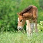 Horse — Stock Photo #18311023