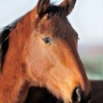 Horse — Stock Photo #18634495