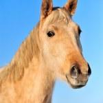 Horse — Stock Photo #18634543