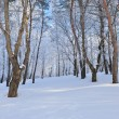 Winter forest — Stock Photo #19158089