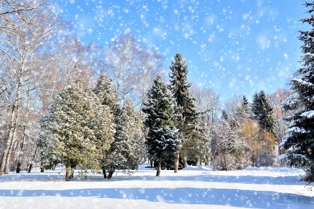 Winter park in snow in sunny day  Stock Photo #19158021