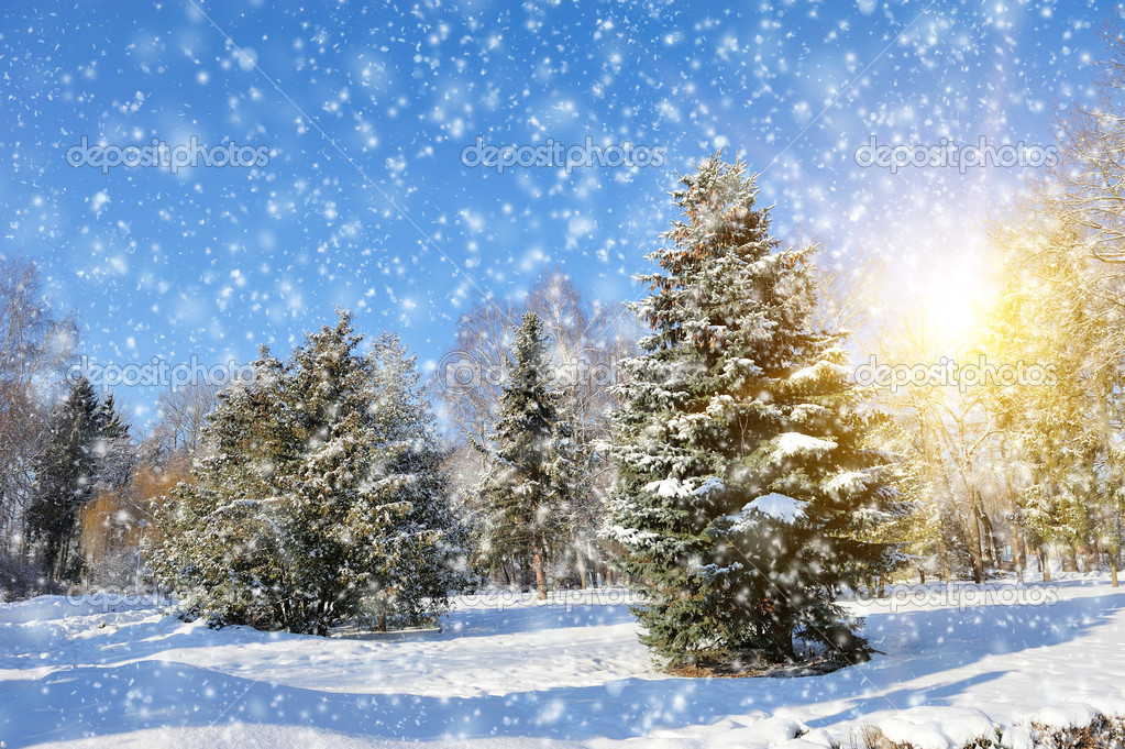 Winter park in snow in sunny day — Stock Photo #19158033