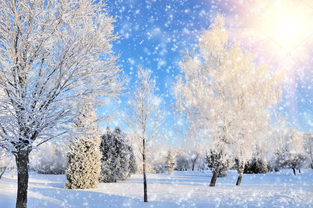 Winter park in snow in sunny day — Stock Photo #19158041