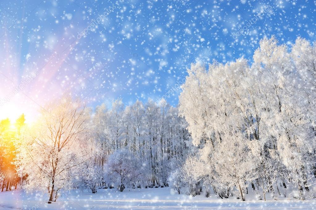 Winter park in snow in sunny day — Stock Photo #19158045