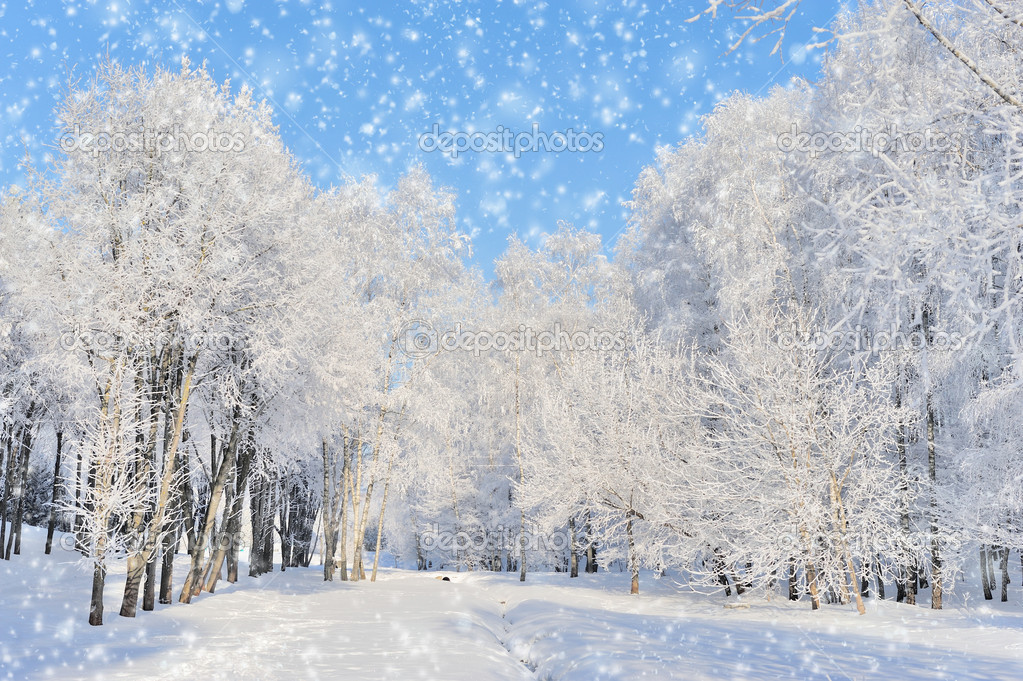 Winter park in snow in sunny day  Stock Photo #19158065