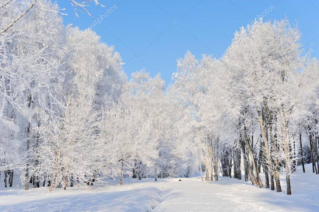 Winter park in snow in sunny day — Stock Photo #19158067