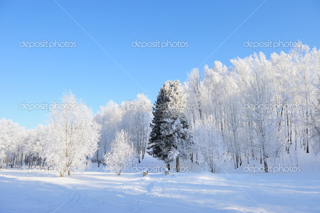 Winter park in snow in sunny day  Stock Photo #19158085