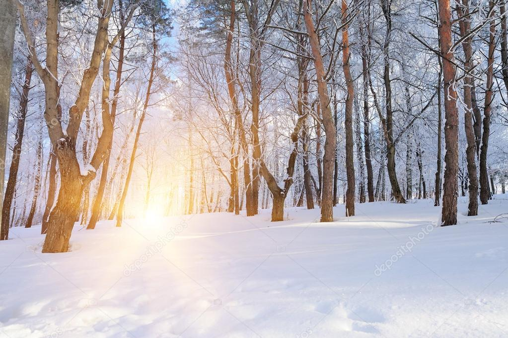 Beautiful winter forest and the road — Stock Photo #19158093