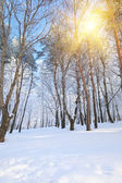 Winter forest — Foto de Stock