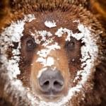 Bear — Stock Photo #20692915