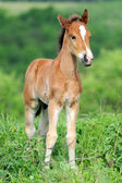Horse in grass — Stock Photo