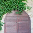 Stock Photo: Wooden door and green plants