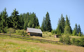 Stary dom w lesie — Zdjęcie stockowe