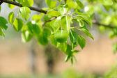 Summer foliage against — Stock Photo