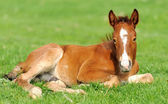 Horse on a meadow — Stock Photo