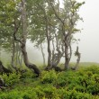 Landscape with fog in mountains — Stock Photo #25960111