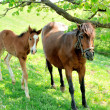 Mare and her foal — Stockfoto #25980037