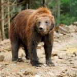 Bear — Stock Photo
