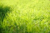Foto di erba sfondo closeup — Foto Stock