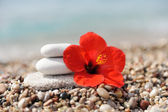 Stack of pebbles and flower — Stock Photo