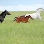 Horse — Stock Photo #32657537