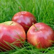 Stock Photo: Apples in grass