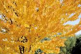Autumn — Stock Photo