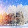 Stockfoto: Winter park