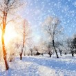Winter park — Stock Photo #34585311