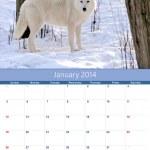 Calendar 2014. January. Arctic wolf — Stock Photo