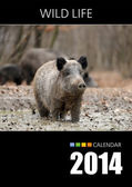 Calendar 2014. Cover. Wild boar in autumn forest — Stockfoto