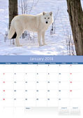 Calendar 2014. January. Arctic wolf — Stock Photo