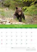 Calendar 2014. May. Bear cub — Stockfoto