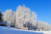 Winter park — Stok fotoğraf