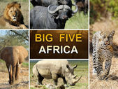 The Big Five — Stock Photo