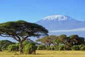 Kilimanjaro — Stock Photo