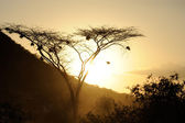 Sunset with African savanna trees — Foto de Stock