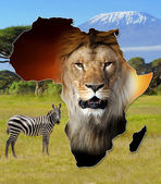 Africa wildlife mappa design — Foto Stock